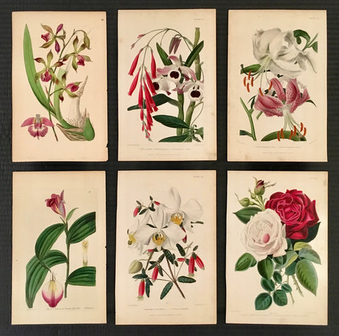 Prints, old prints, home decor, florals, floral prints, flowers, flower prints, pink and green, interior decor, inspiration, design, botanicals, botanical prints, wall art, wall decor, style me, print set, six prints, traditional, pretty