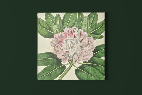 Botanical prints, botanicals, flowers, floral prints, home decor prints, interior design, inspiration, bright flowers, colorful, rhododendron, rhododendron art, wall decor, wall art, traditional decor, fun, playful, art