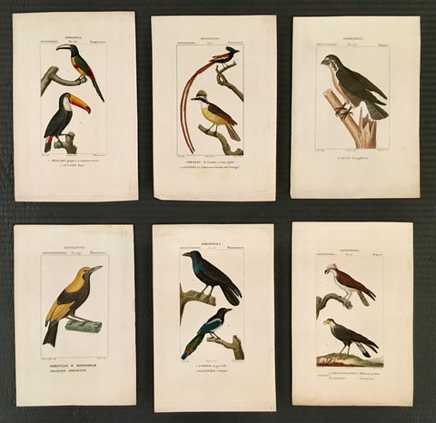 Birds, bird prints, bird, ornithology, home decor, wall decor, interior decor inspiration, gallery wall, interior design, wall art, artwork, for sale, bird art, elegant, colorful, traditional home decor, traditional decor, classic decor,