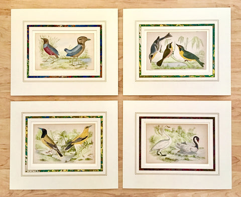 Birds, bird prints, Victoria Cooper Antique Prints, antique prints, old prints, paperwork, marbled matting, matting, marbling, bird decor, bird art, bird illustrations, print set, gallery wall art, gallery wall ideas, home decor ideas, traditional style, traditional decorating,