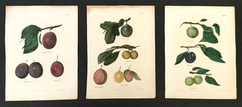 Fruit, fruit prints, fruit art, home decor, interior decor, antique prints, home decorating, interior design, design ideas, inspiration, print sets, kitchen decor, kitchen art, breakfast nook, wall decor, wall art, plums, history, unique, original,
