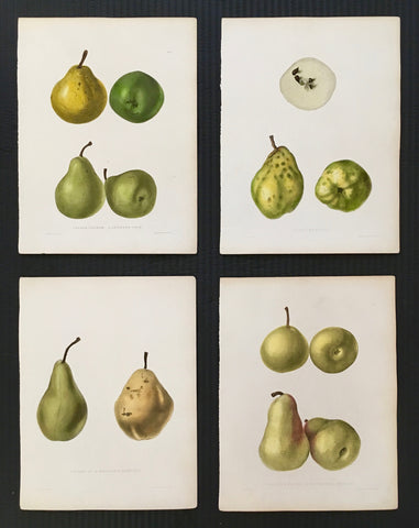 Pears, pear prints, print sets, print set, kitchen art, kitchen decor, wall decor, home decor, botanical prints, fruit, fruit art, cool, fruit prints, antique prints, old prints, original, unique, decor, design, engraving, colourful, green, greens, pretty, artistic, lovely