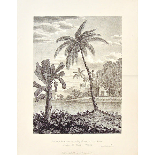 Hindoo Peasant, Hindoo, Hindu Peasant, Hindu, Peasant, ascending a cocoa nut tree, Ascending a Palm Tree, Cocoa Nut Tree, coconut tree, palm Trees, Drawing the Tari, Drawing the Toddy, Tari, Toddy, climbing a tree, by the water, India, Indian, Indian trees, James Forbes, Forbes, Eliza Rosée, Countess De Montalembert, Oriental Memoirs, Narrative of Seventeen Years Residence in India, Bentley, 8 New Burlington Street, London, Shury, Nichols & Son, 25 Parliament Street, 1768, 1834, Antique Print, Antique, Pri
