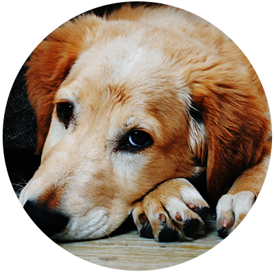 What Can I Give My Dog For Anxiety During Storms