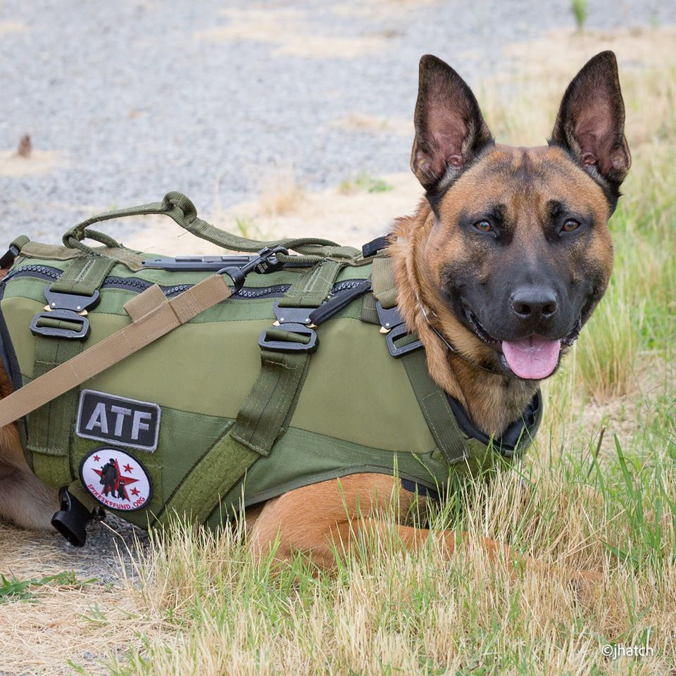 """Protect A K9"" Package"