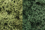 Lichen Light Green Mix L167 - Wyndham Art Supplies