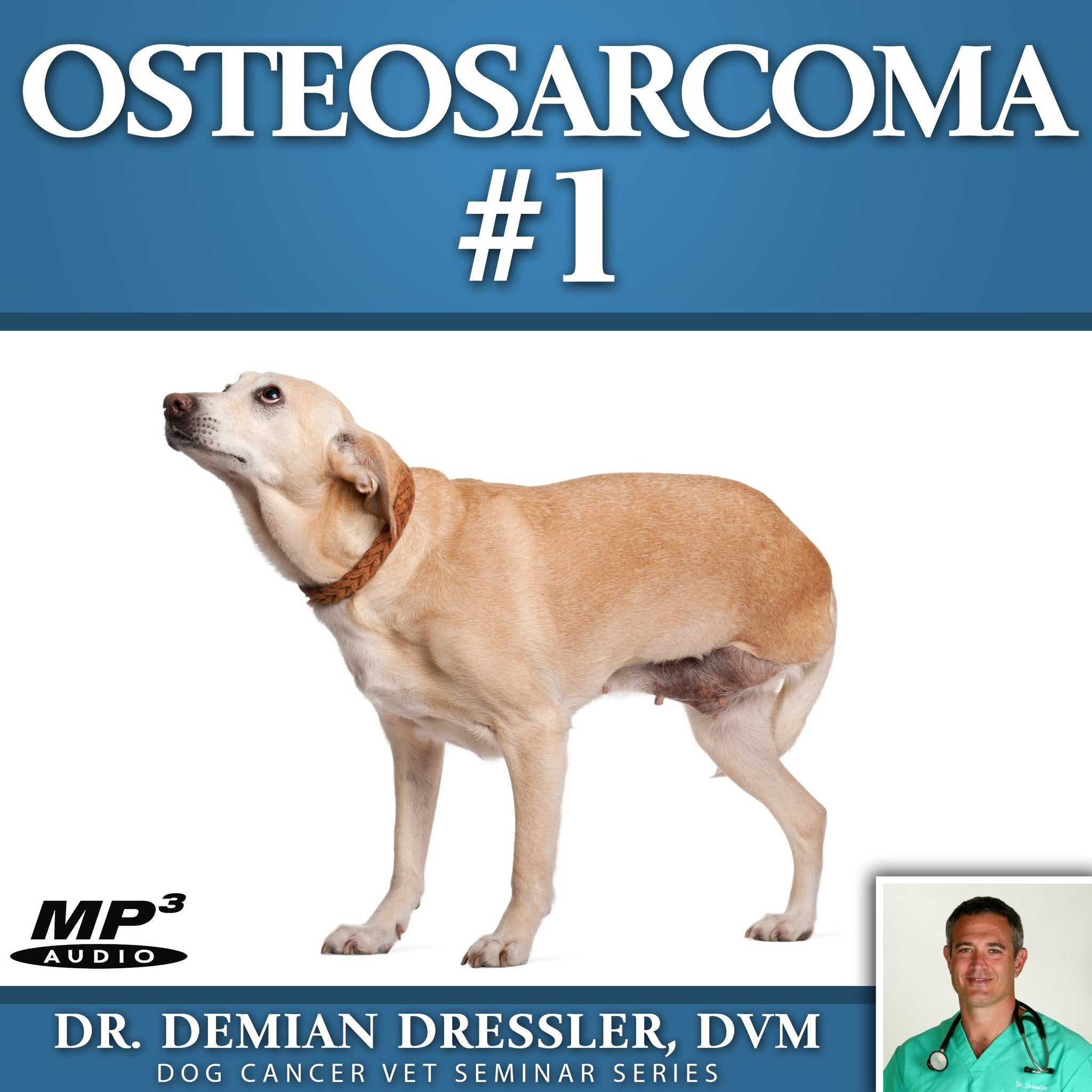 Bone Cancer (Osteosarcoma) in Dogs | petMD