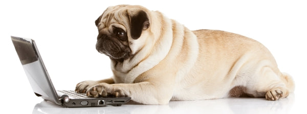 Pug typing with paws on laptop
