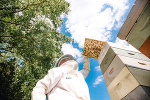 How to Save Pollinators with Beekeeper Jay Williams