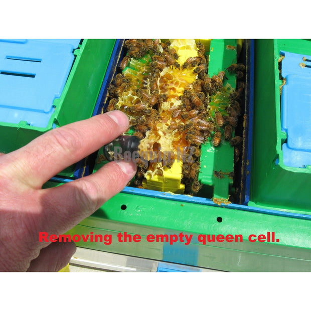 Technosetbee Q8 - Queen Mating Nucleus