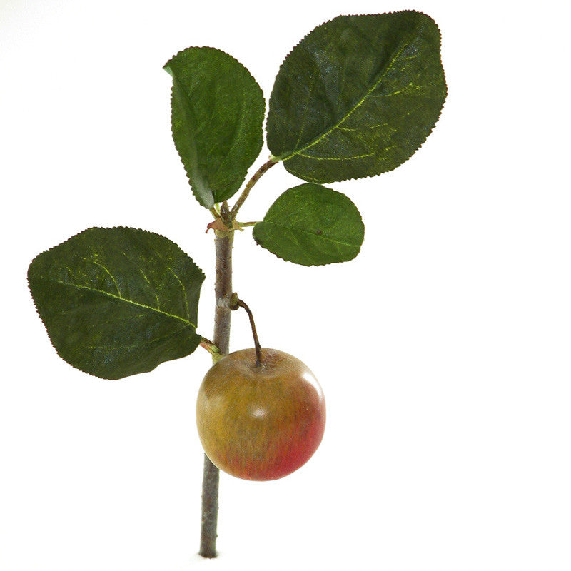 Braeburn Apple Branch - New Growth Designs