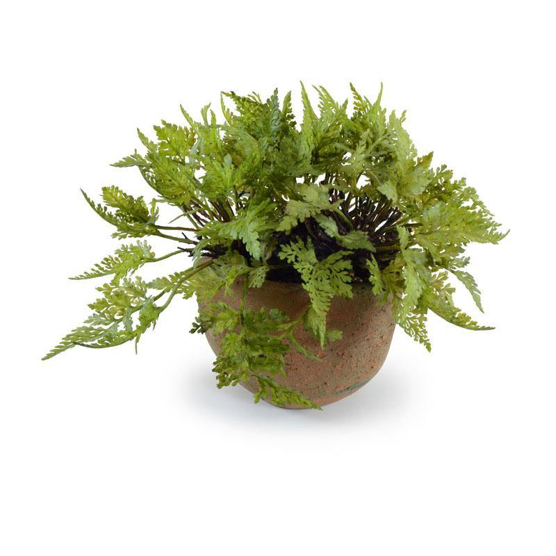 Small Woodland Fern