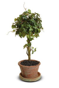 Ivy Topiary - New Growth Designs