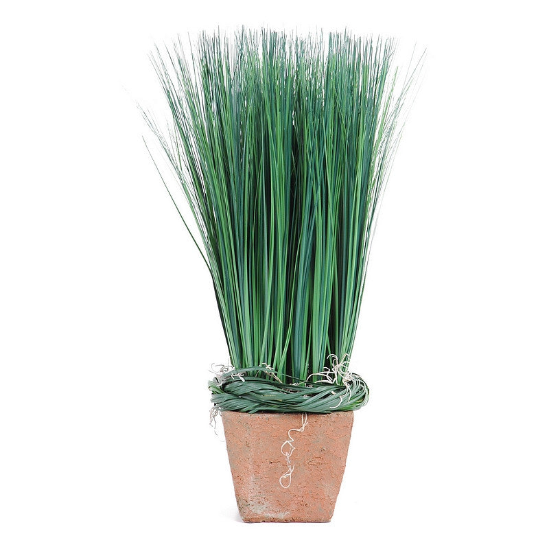 Onion Grass - Green - New Growth Designs