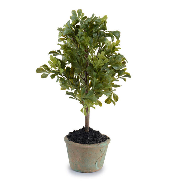 Mini-Boxwood Bush