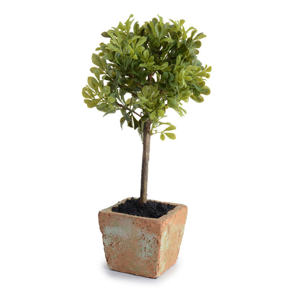 Mini-Boxwood Topiary