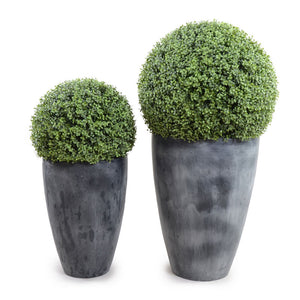 "15"" Boxwood Ball in Tapered Pot - New Growth Designs"