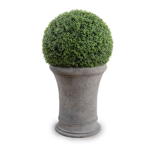 "22"" Boxwood Drum Topiary - New Growth Designs"