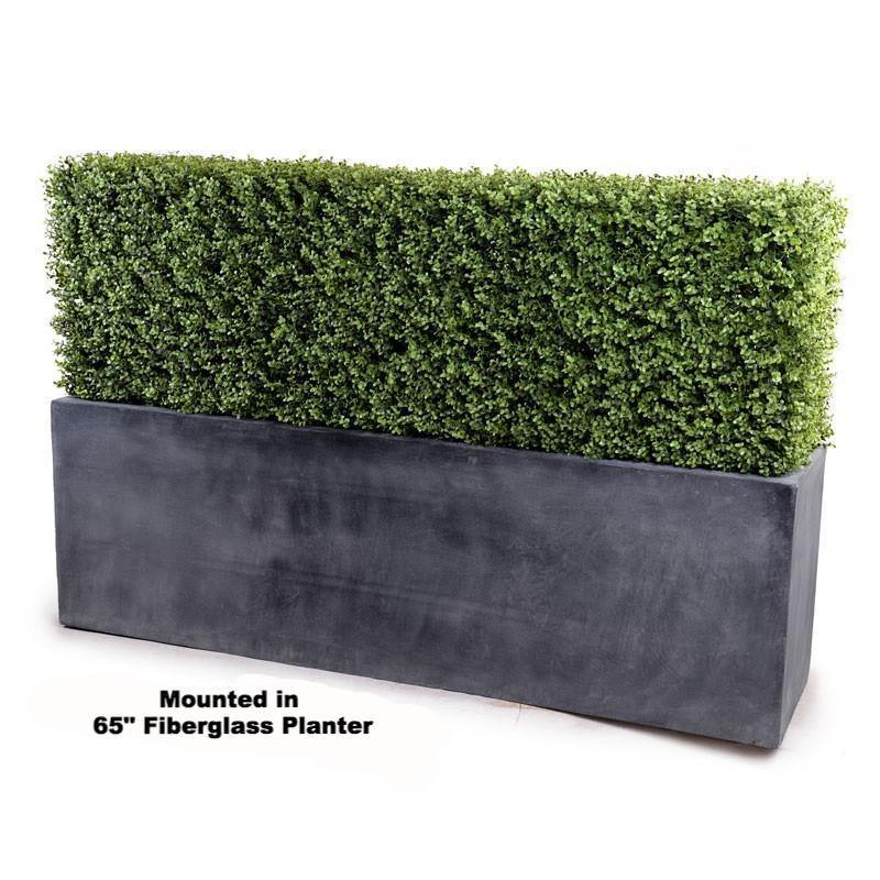 "62"" Boxwood Hedge with planter - New Growth Designs"