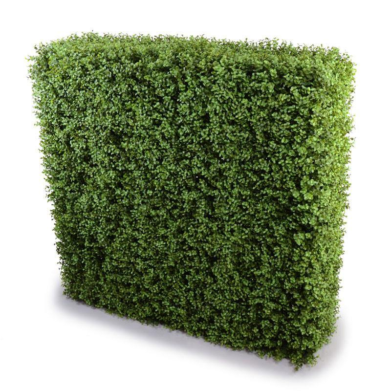 "42"" Boxwood Hedge - New Growth Designs"