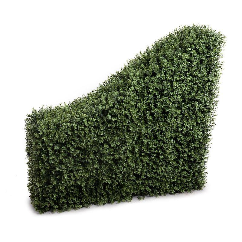 Boxwood Hedge, Transition - New Growth Designs