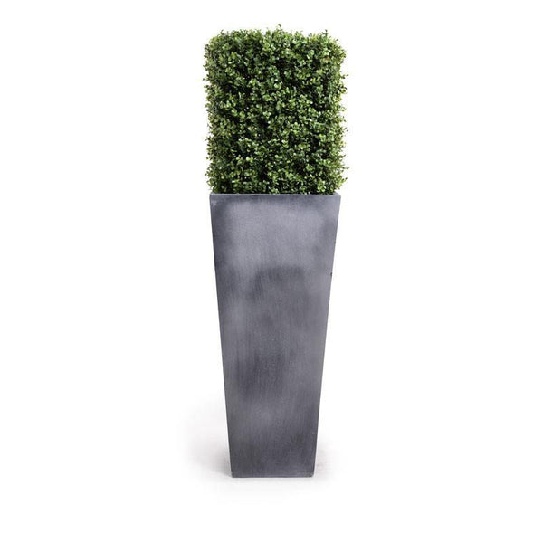 Boxwood Column in Pot
