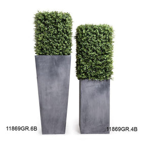 Boxwood Column in Pot - New Growth Designs