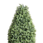 Boxwood Obelisk in Pot - New Growth Designs
