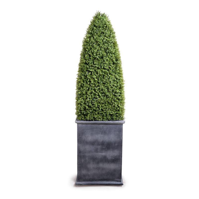 Boxwood Large Obelisk in Fiberglass Pot - New Growth Designs