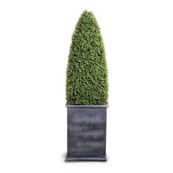 Boxwood Large Obelisk in Fiberglass Pot