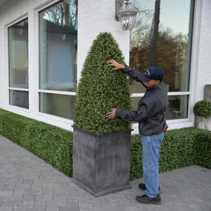 Boxwood Large Obelisk