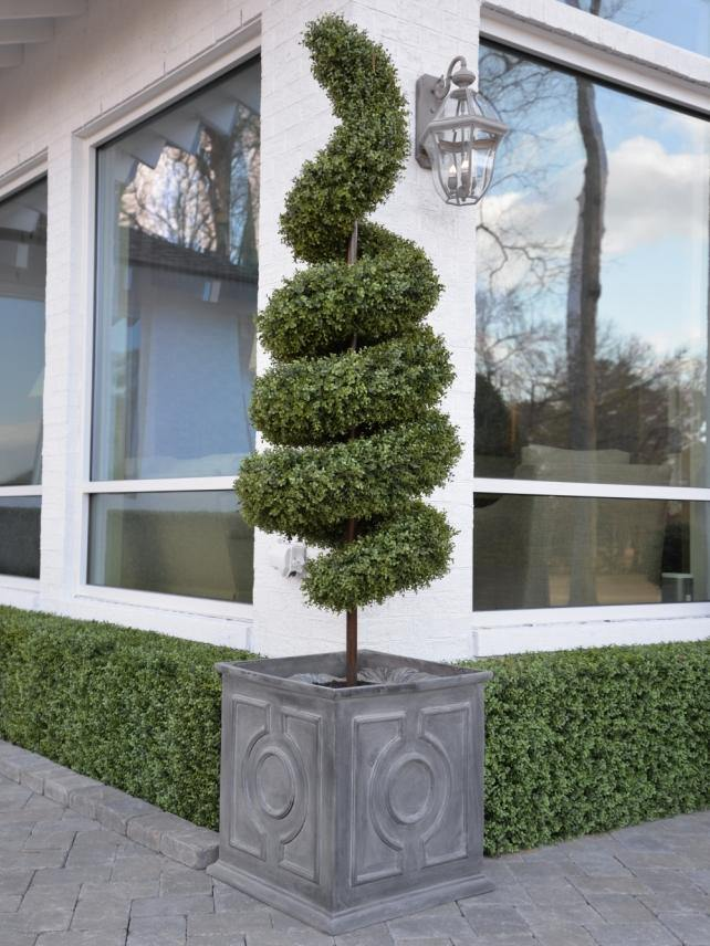 Boxwood Spiral - New Growth Designs