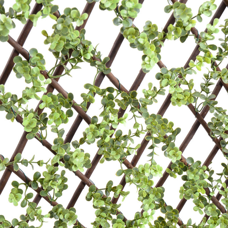Expanding Lattice Screen, Boxwood - New Growth Designs