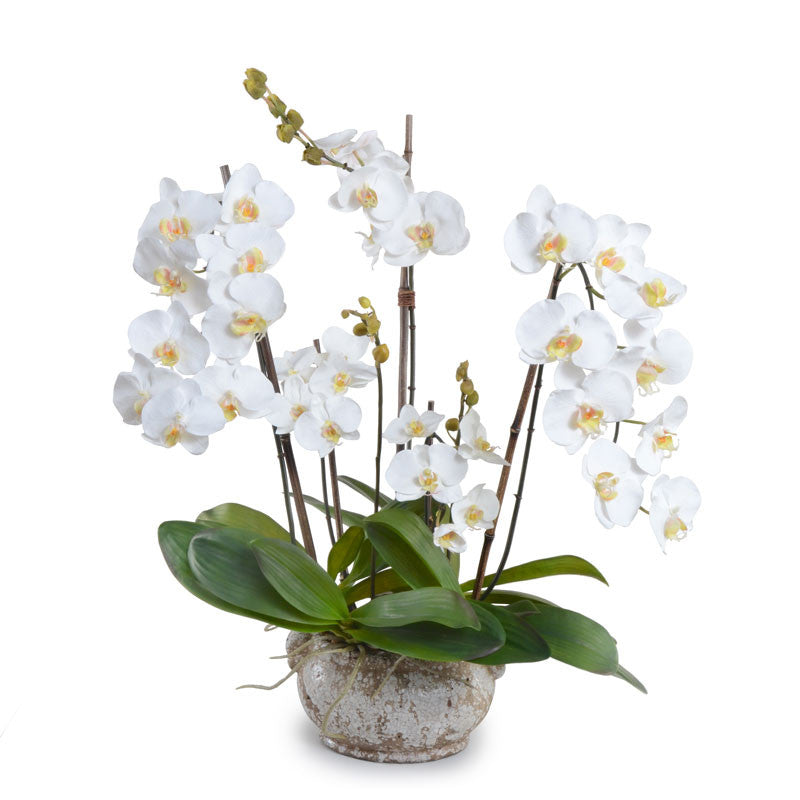Phalaenopsis Orchid x5 in Ceramic Bowl