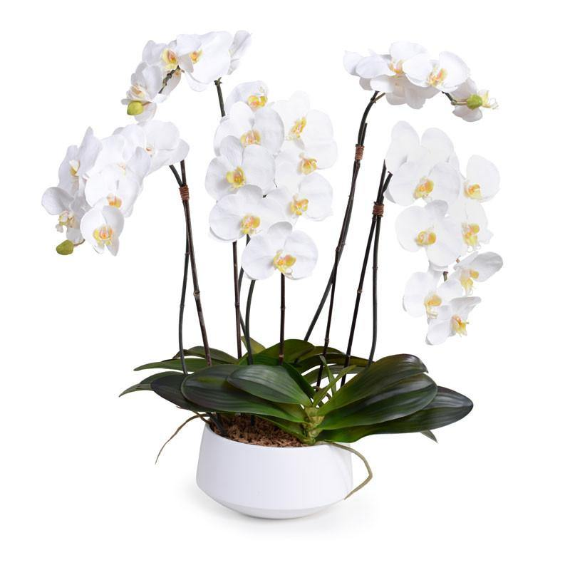 Phalaenopsis Orchid x5 in Ceramic Bowl - White in White Bowl