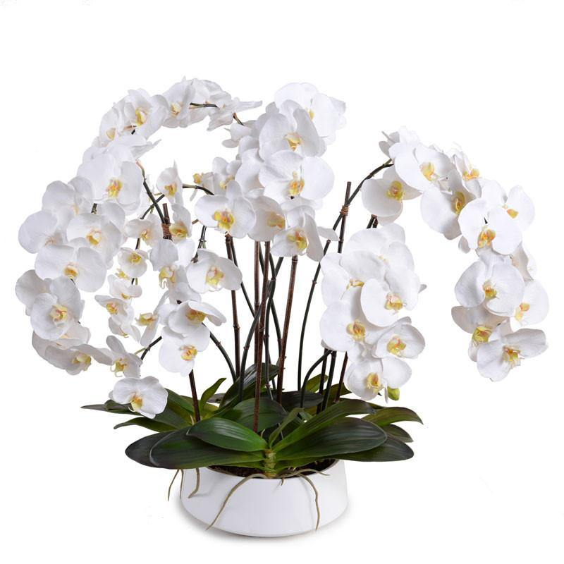 Phalaenopsis Orchid x8 in Ceramic Bowl - White - New Growth Designs