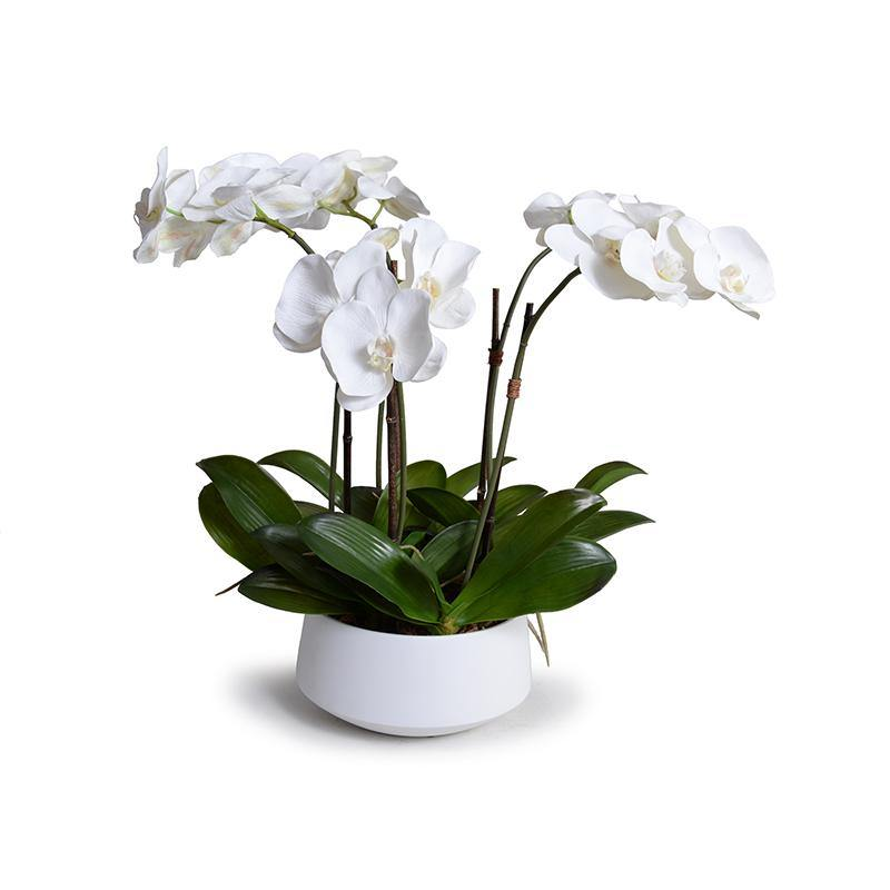 Phalaenopsis Orchid x5 in Ceramic Bowl - White - New Growth Designs