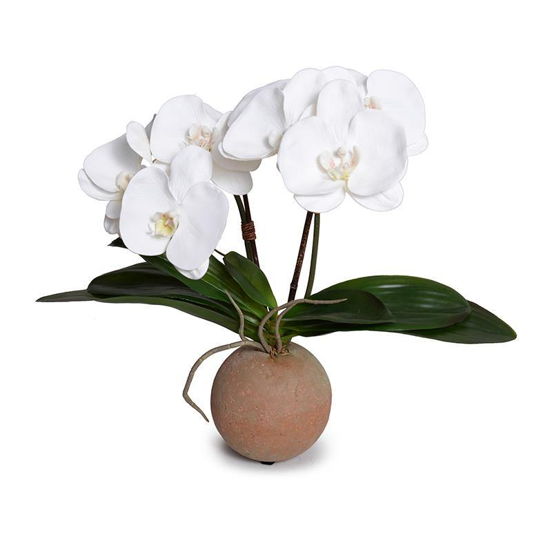 Phalaenopsis Orchid x2 in Terracotta Ball Pot - White