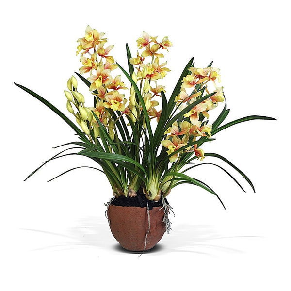 Cymbidium Orchid - New Growth Designs