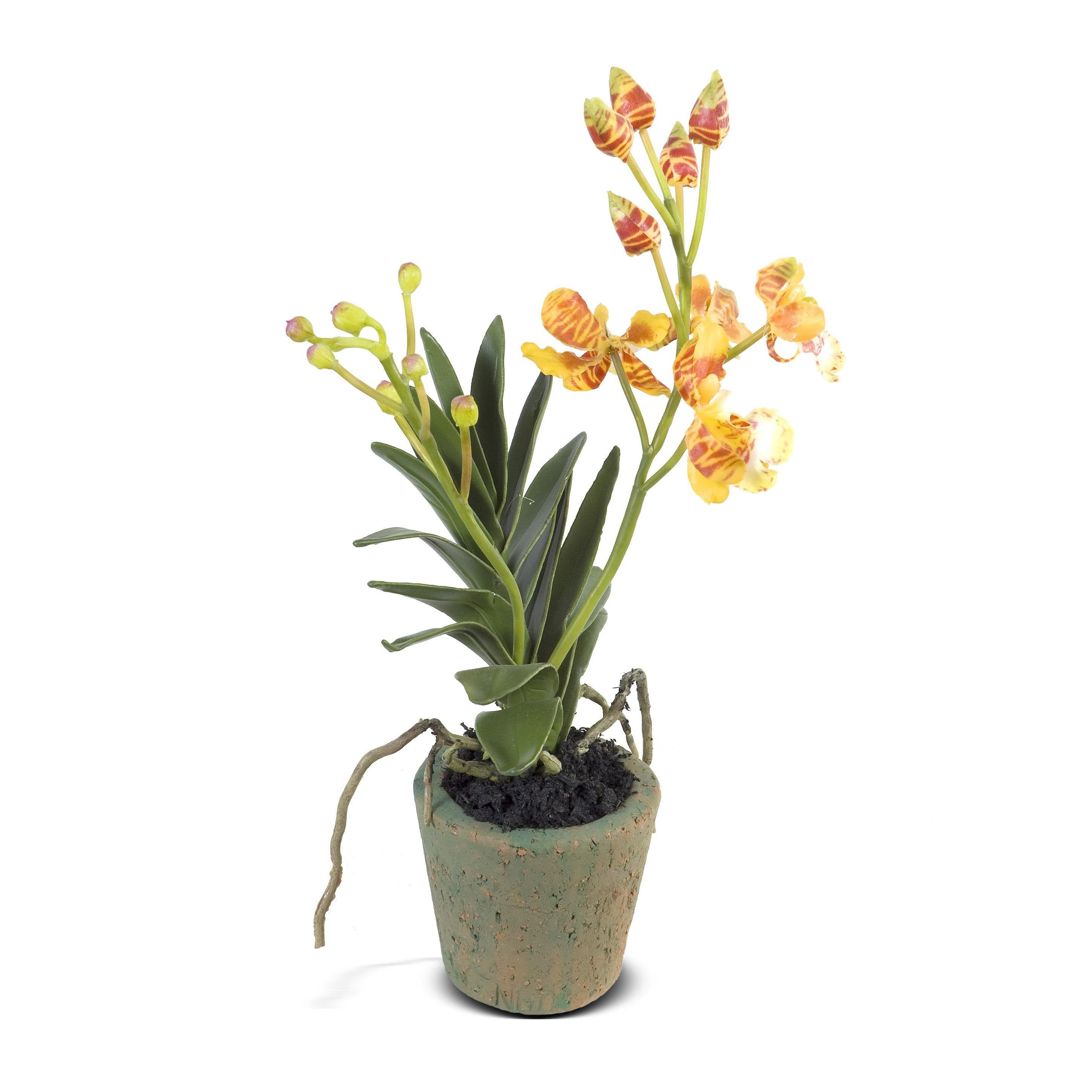 Mini Orchid - Vanda - Gold