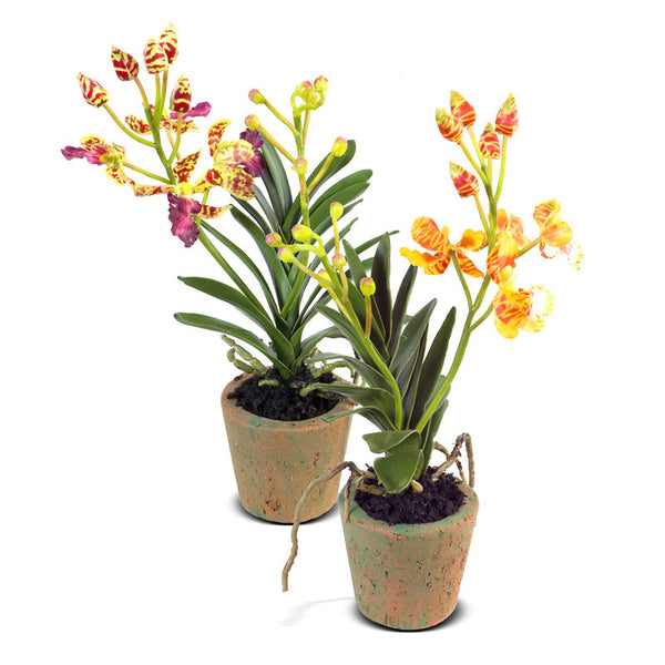 Mini Orchid Vanda New Growth Designs