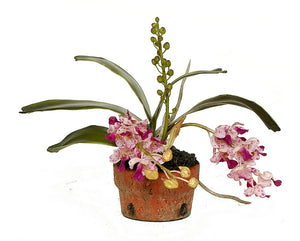 Orchid Minis - Assorted