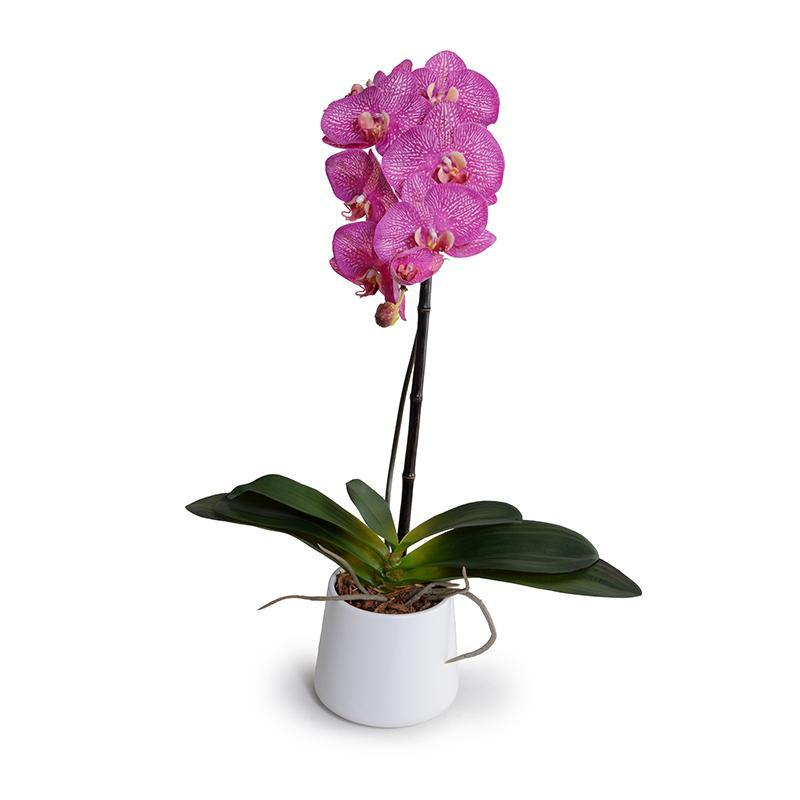 "Phalaenopsis Orchid x1 in White Ceramic Bowl, 27""H - Fuchsia - New Growth Designs"