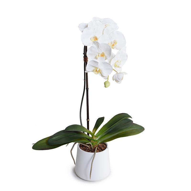 "Phalaenopsis Orchid x1 in White Ceramic Bowl, 27""H - White - New Growth Designs"