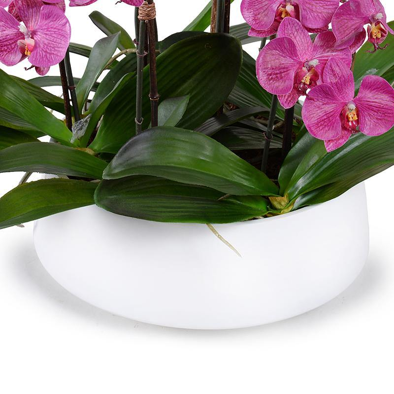 Phalaenopsis Orchid x9 in Ceramic Bowl - Fuchsia - New Growth Designs