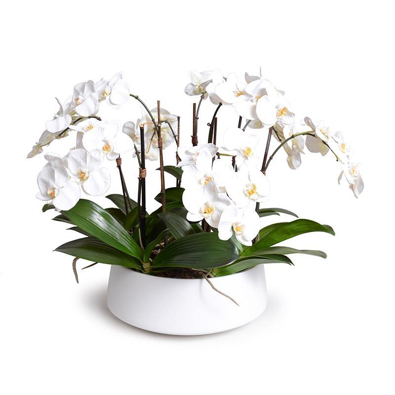 Phalaenopsis Orchid x9 in Ceramic Bowl - White - New Growth Designs