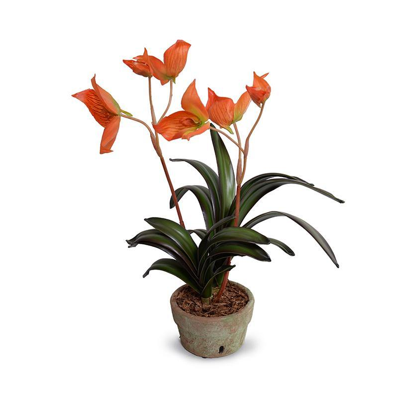 Disa Orchid in Terracotta - Orange - New Growth Designs
