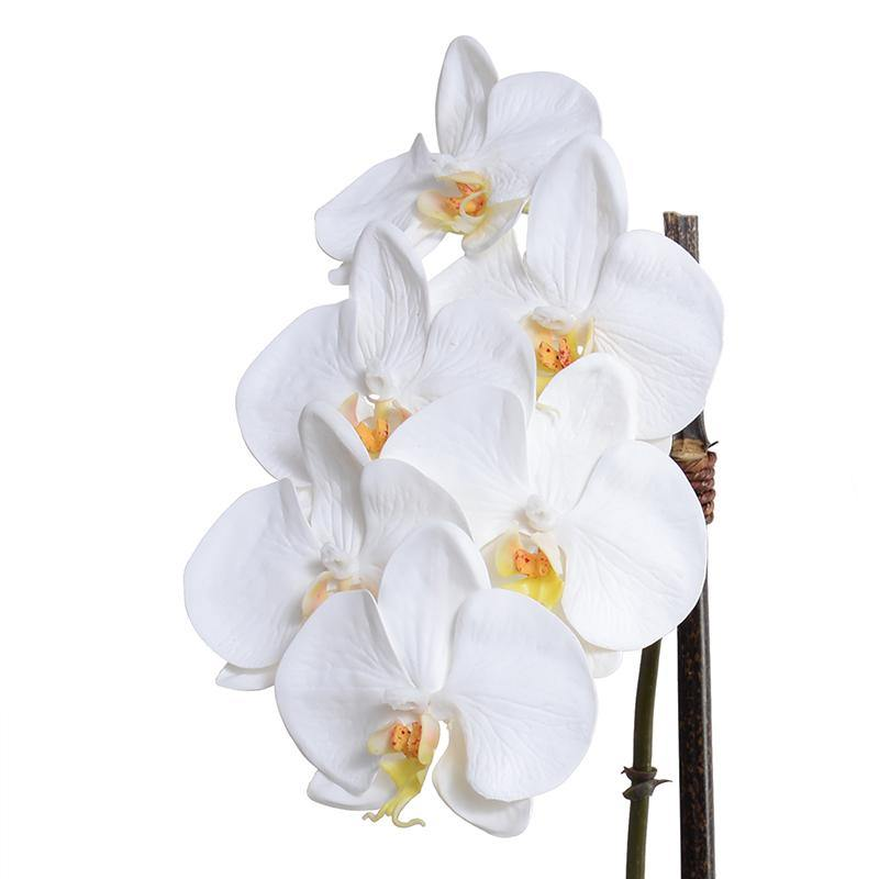 "Phalaenopsis Orchid x2 in White Ceramic Bowl, 18""H - White - New Growth Designs"