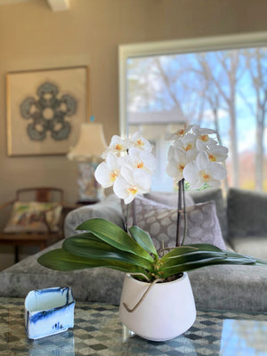 "Phalaenopsis Orchid x2 in White Ceramic Bowl, 18""H - White"