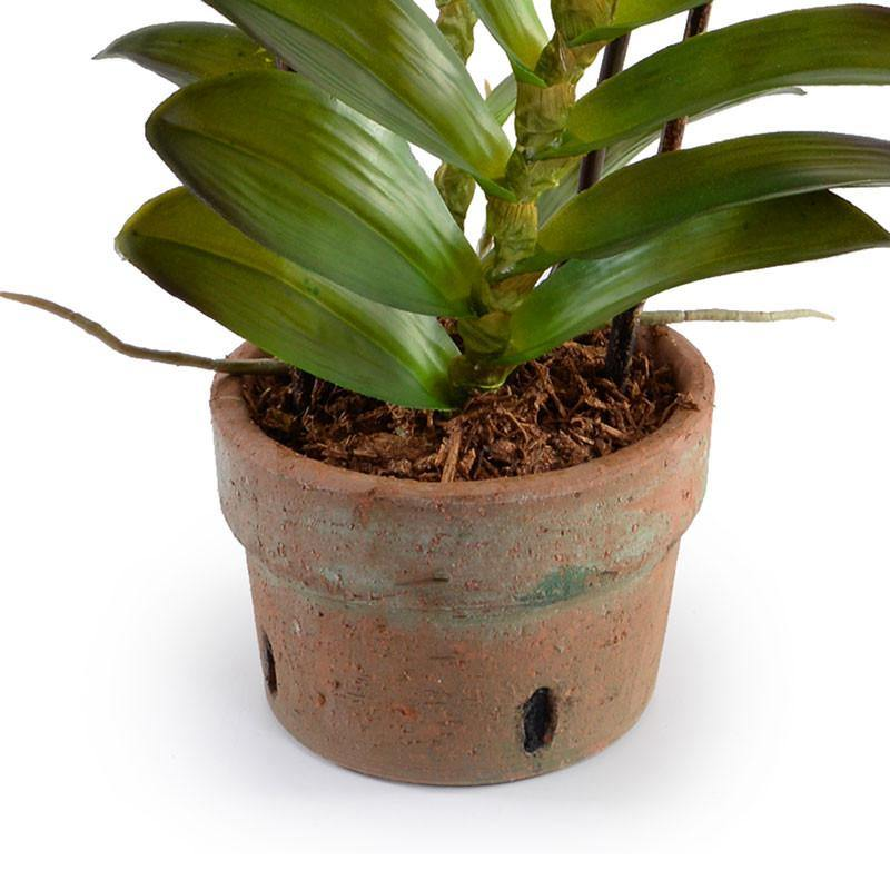 Aranda Orchid - New Growth Designs